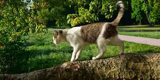 Eine streunende Katze im Park
