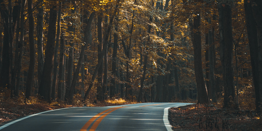 Straße im Wald ©Foto: Pexels auf Pixabay