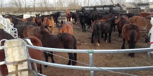 Unter diesen Bedingungen wurden die Pferde gehalten