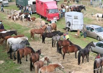 havelberg   pferdemarkt 04