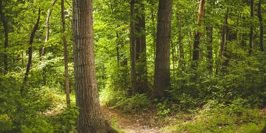 Wald ©Foto: Pexels auf Pixabay