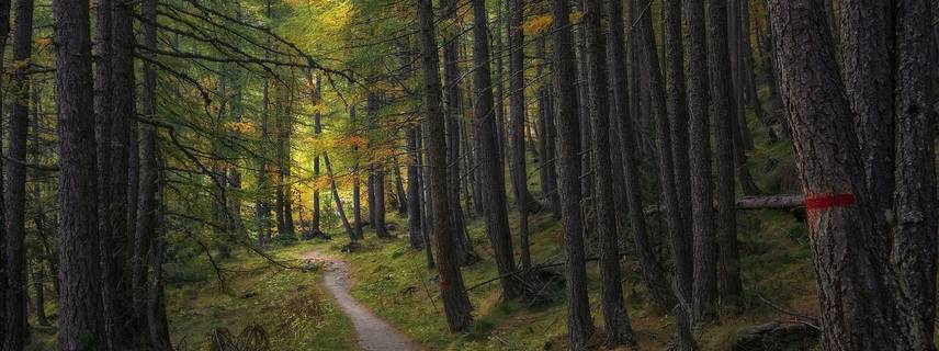 Das Foto zeigt nicht den Seehäuser Forst ©Foto:  Sergio Cerrato auf Pixabay